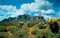 the Superstition Mountains provide a striking backdrop for a typical Sonoran Desert.