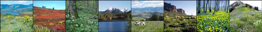 Strip of images from wildflower viewing areas on the national forests and grasslands.